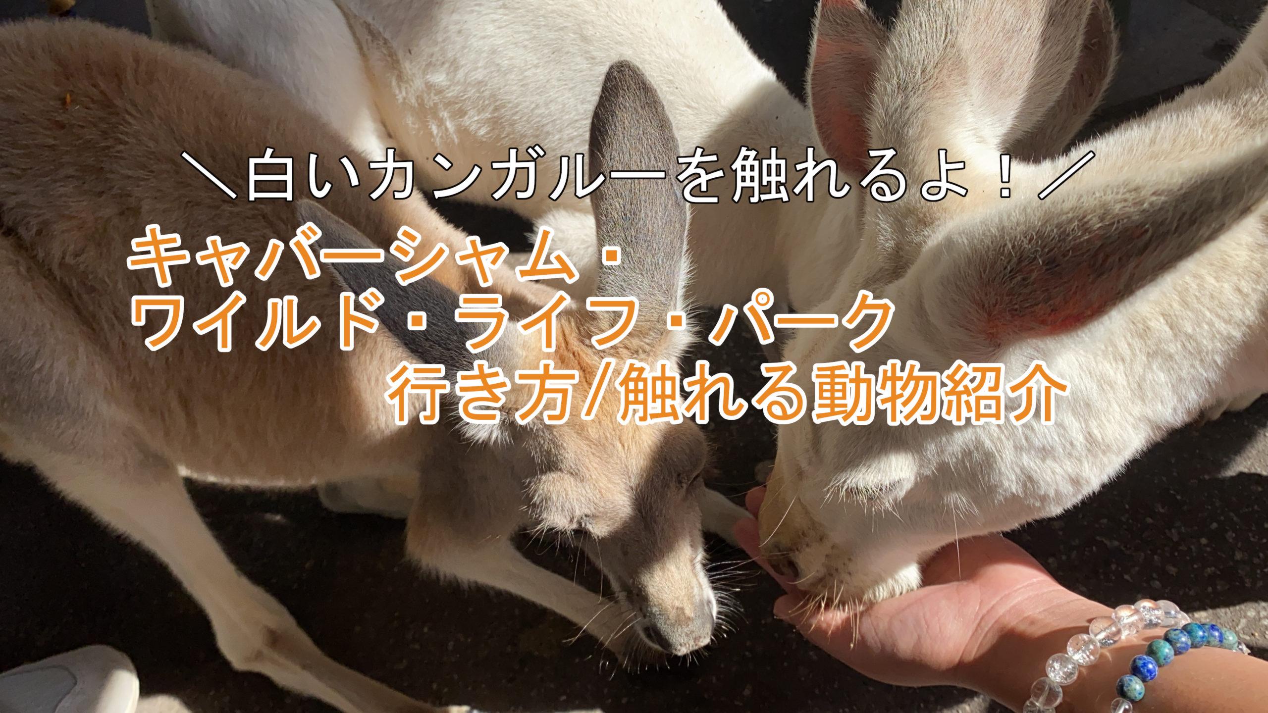 白いカンガルーに触れるパースのキャバーシャム・ワイルド・ライフ・パークの行き方と触れ合える動物紹介